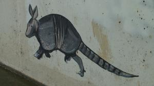 keller-armadillo