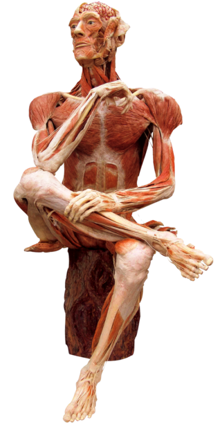 Gunther von Hagens' BODY WORLDS, Institute for Plastination, Heidelberg, Germany