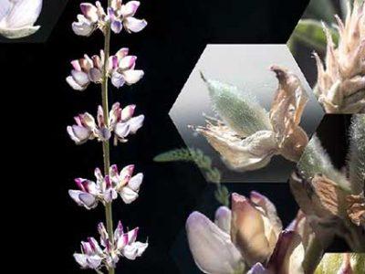 Nancy Macko: The Fragile Bee