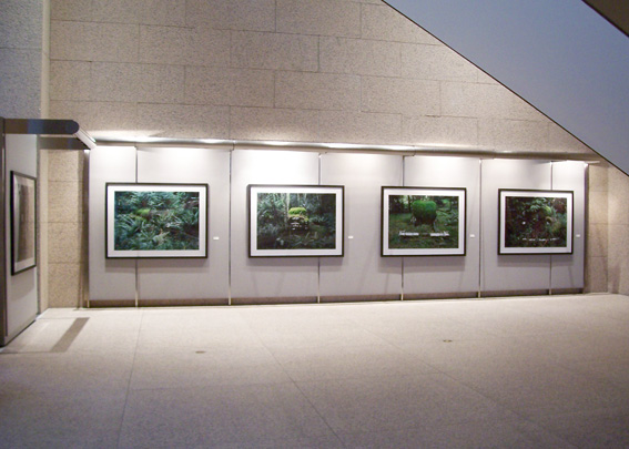 Eric Klemm Installation View Metamorphosis 2006 Feature Exhibition of FotoFest Houston at the Williams Tower Gallery
