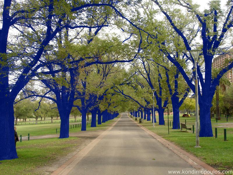 The Blue Trees, 2006, Melbourne Australia, Photo Courtesy of the Artist
