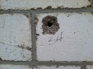 Margolles' Muro baleado Detail