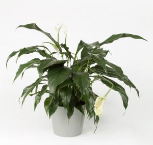 House Plant 2