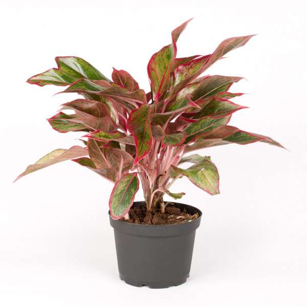 House Plant 4