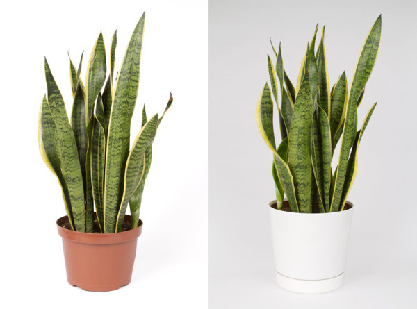 House Plant 3, and House Plant 5