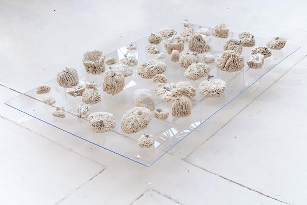 biota table