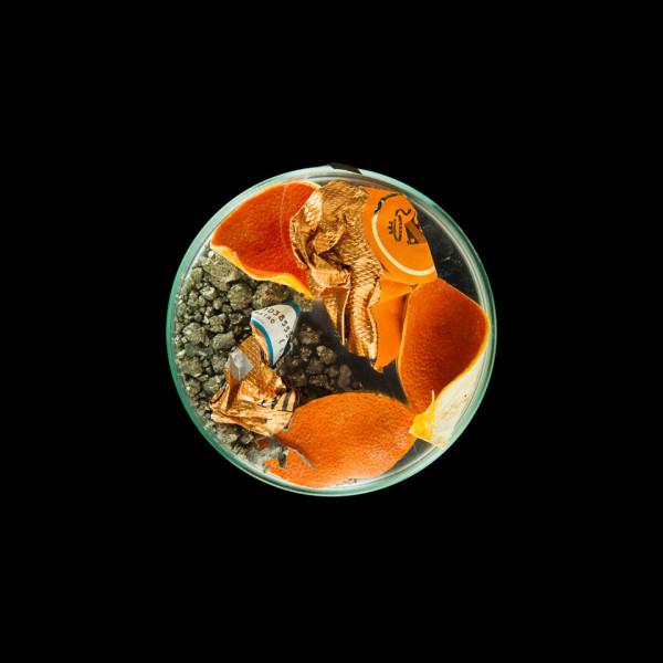 vanitas in a petrie dish orange