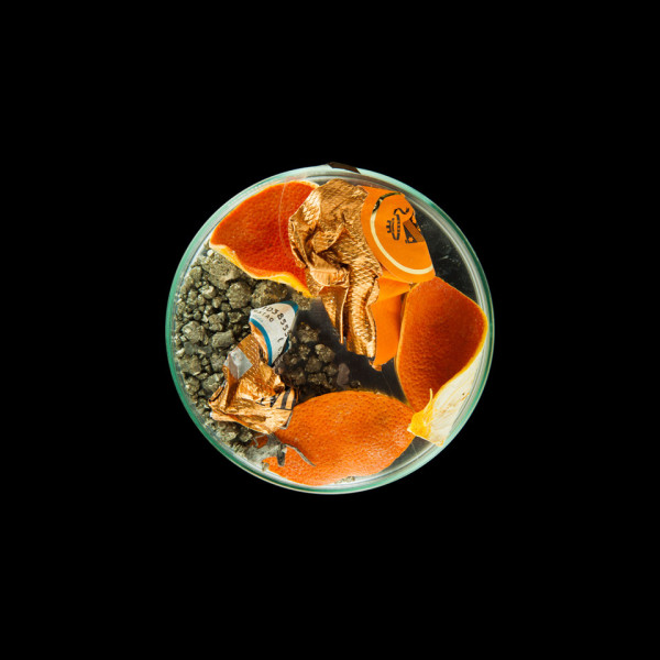 vanitas in a petrie dish orange