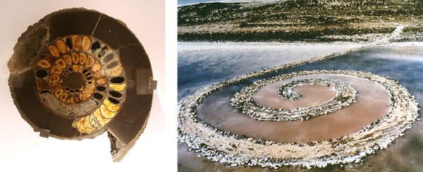 (l) Ammonite, Late Jurassic-Early Cretaceous period, Volga River, Russia (r) Robert Smithson, Spiral Jetty, 1970