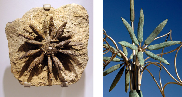 (l) Brittle Stars, Jurassic, Dorset County, England (r) James Surls, Rolling Flower, 2009