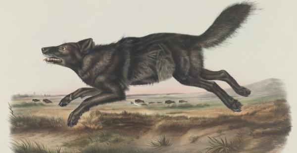 audubon beasts