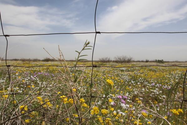 Photo via Fronteras Desk
