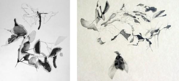 Lawrence_Shadow Drawings