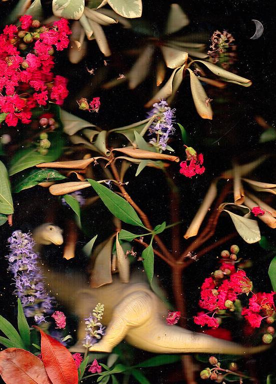 Chris Adams, Apatosaurus Pollen