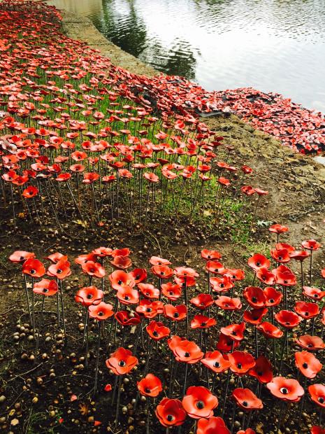 Jen Rose poppies aerial 2