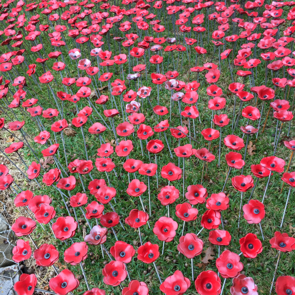 Jen Rose poppies aerial view