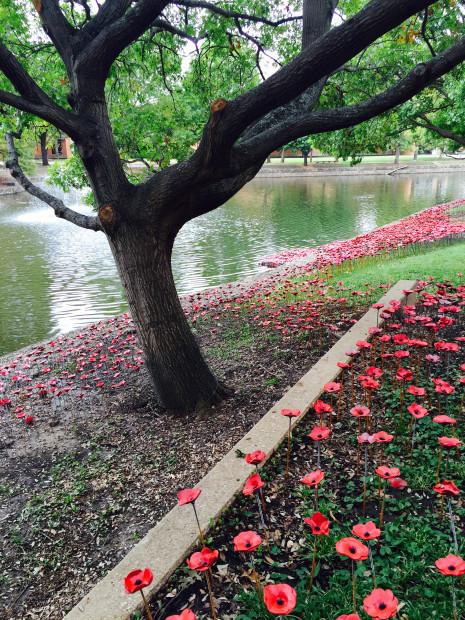 Jen Rose poppies vertical 2