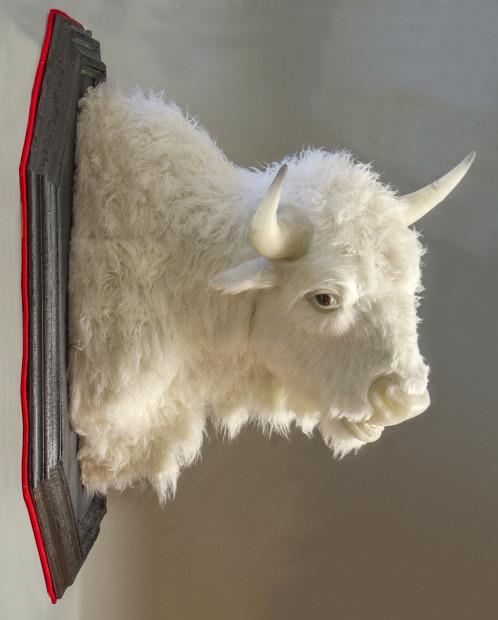 buffalo-profile