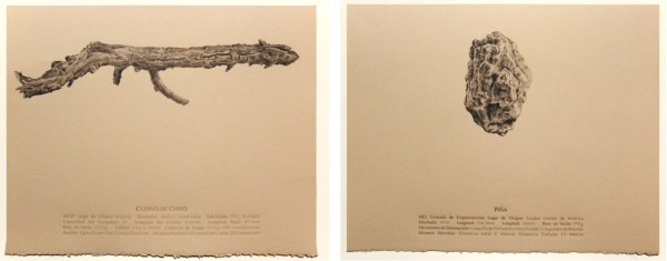Cuerno de Chivo (Goat's Horn), 2013, graphite and embossed text on Canson wheat paper, 11 x 14 in. Piña (Pineapple), 2013, graphite and embossed text on Canson wheat paper, 11 x 14 in.