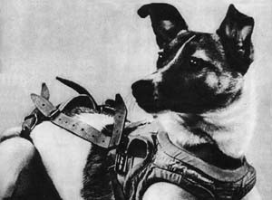 """Laika (Soviet dog)."" Licensed under Fair use via Wikipedia."