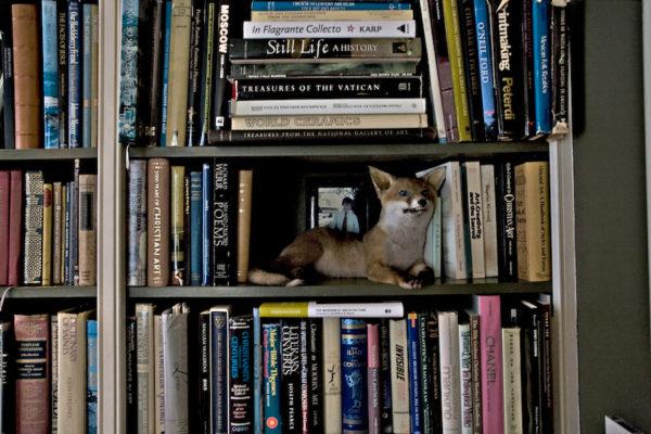 13-library-book-shelf