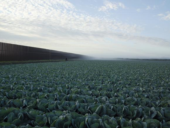 Richard Misrach, Cabbage crop and wall, Brownsville, Texas, 2015. Inkjet print.