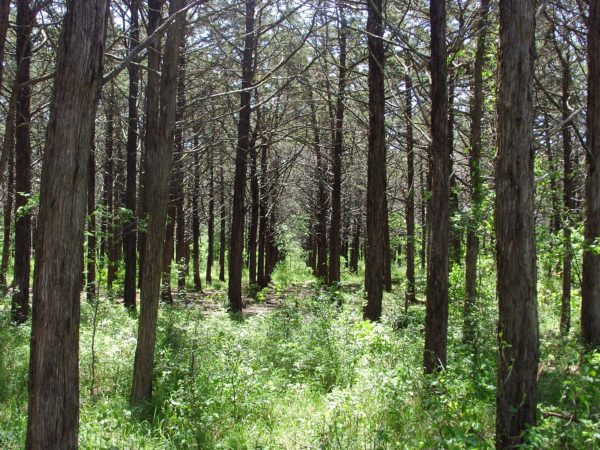 The Parallel Wood, Meers Rd., Oklahoma