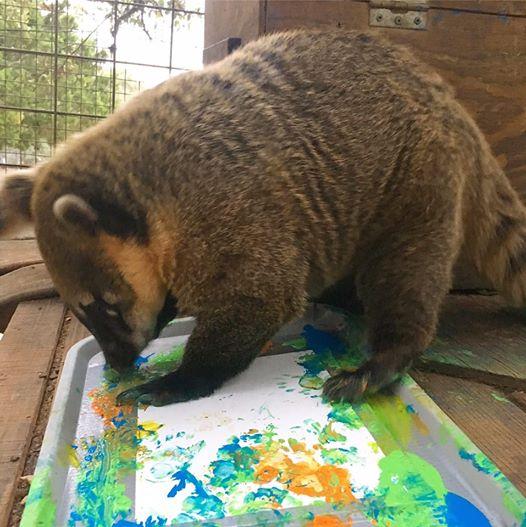 primate art