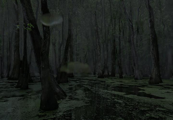 Cypress Swamp, Middle Mississippi; 2014