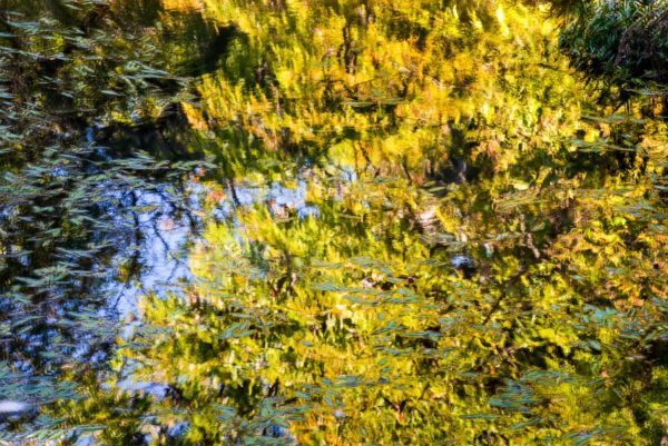 Luther Smith, Reflections, Fort Worth, Texas, October 22, 2013, Epson Ultra chrome inkjet print, 20 x 30 in.