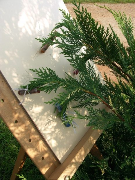 Jonathon Keats' drawings created by swaying Leland cypress trees