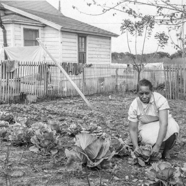 [Woman Gardening]