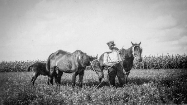 [Man with Horses]