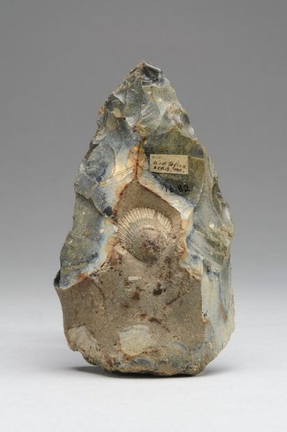 Handaxe knapped around a fossil shell, West Tofts, Norfolk, England Ca. 500,000-300,000 Flint Approx. 5 1/4 x 3 in. (13.3 x 7.6 cm) Museum of Archaeology and Anthropology, University of Cambridge