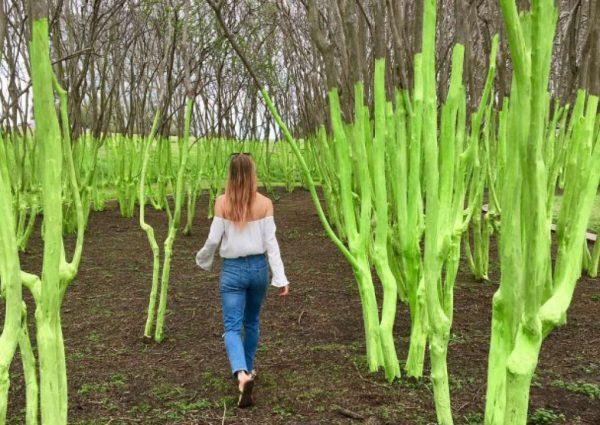 Green Tree installation in Houston Texas