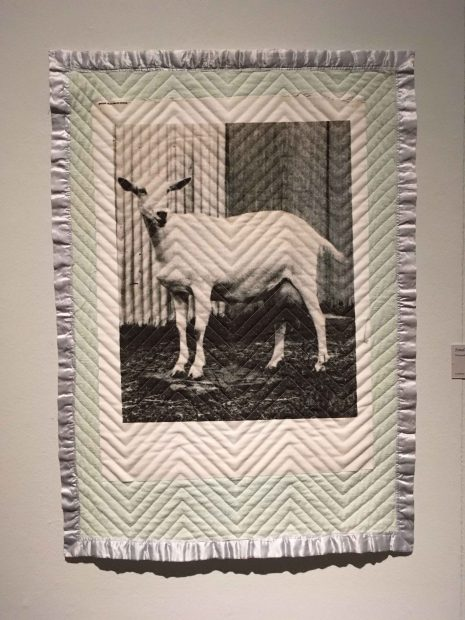 Small Blanket (Goat), 2016. Thermal transfer, quilted vintage baby blanket, thread