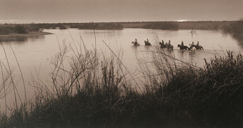 Photo: Cattle Crossing the Rio Grande, by Bill Witliff.