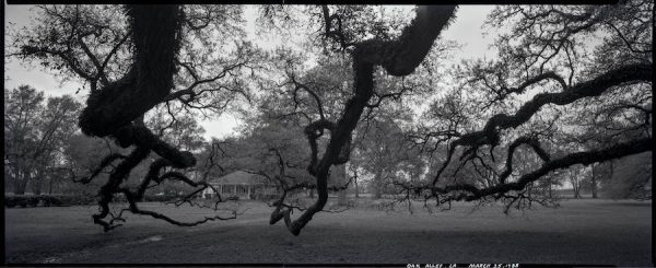 Luther Smith, Oak Alley, Louisiana, March 28, 1988