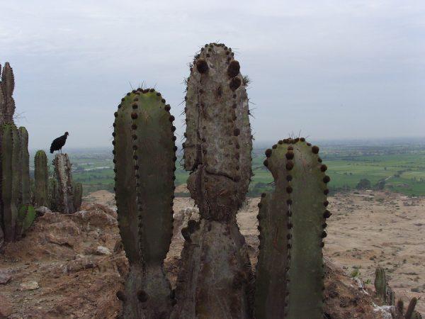 From high on La Raya, 2006