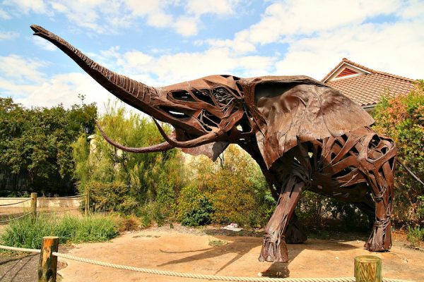 Fowler's elephant at the Houston Zoo.