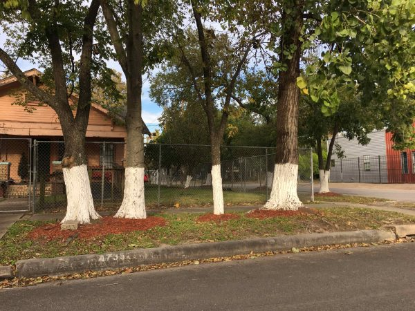 Painted Trees in Houston Neighborhood