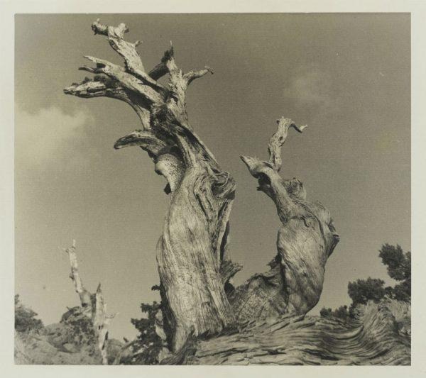 W.E. Dassonville photograph San Antonio Museum of Art Collection Gift