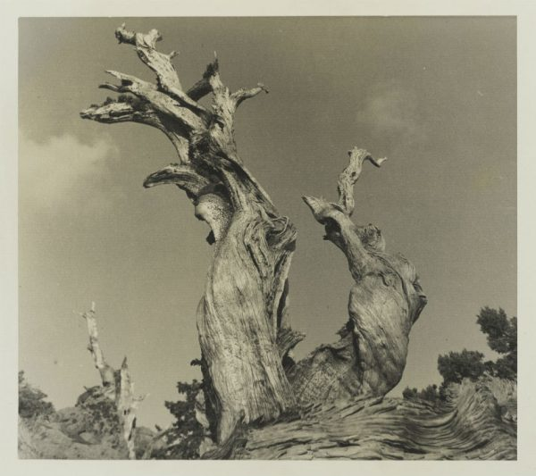 W.E. Dassonville photograph San Antonio Museum of Art Collection Gift
