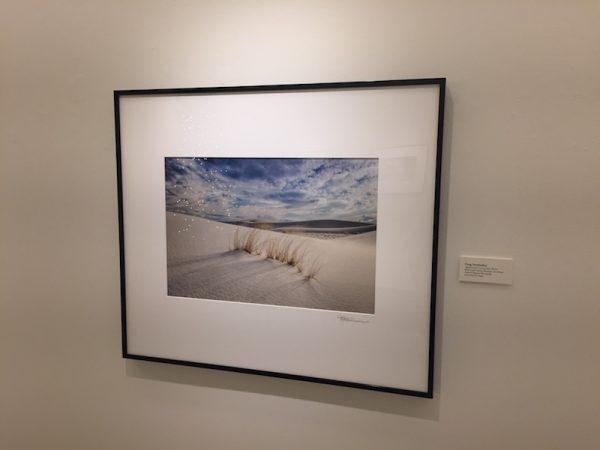 Alkali Sacaton Grass on Dunes