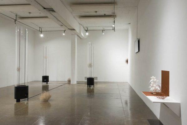 Installation view of Juana Córdova's exhibition at Artpace, San Antonio