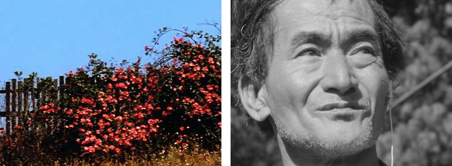 L: All My Life (1966) by Bruce Baillie. R: Mr. Hayashi (1961) by Bruce Baillie