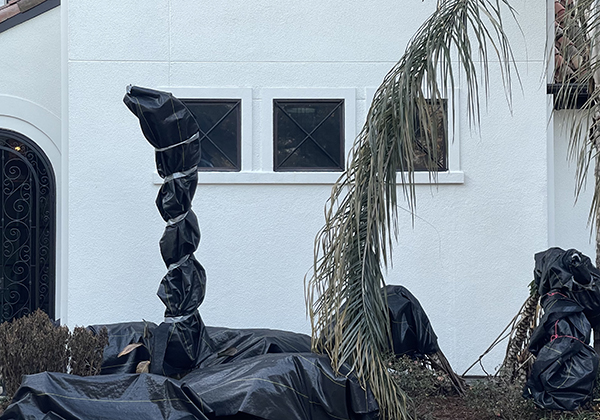 A plant wrapped in plastic to prevent freezing during the ice storm that hit Houston the week of Feruary 14, 2021