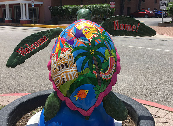 Tranquilo-Baby-Turtle-About-Town