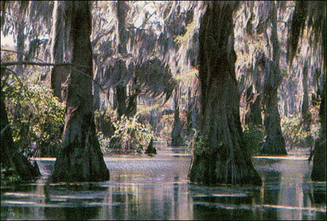 bald_cypress_swamp.jpg